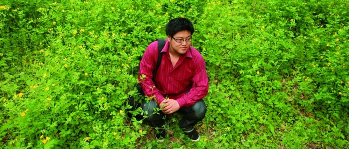 yin-qingfeng