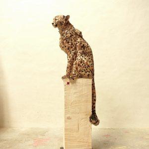 Sitting Cheetah - Wood - 162x50x35cm